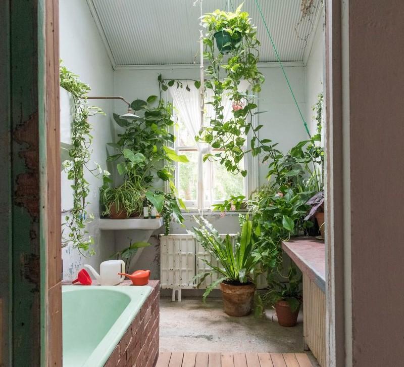 растения для ванной с окном