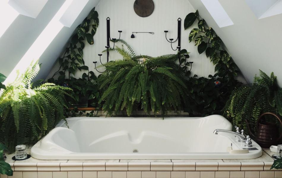 какие растения можно в ванной