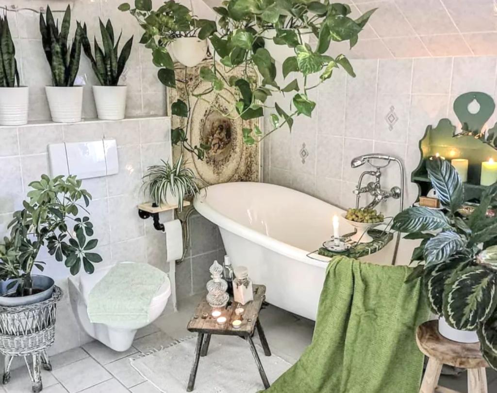 растения для ванной без окна