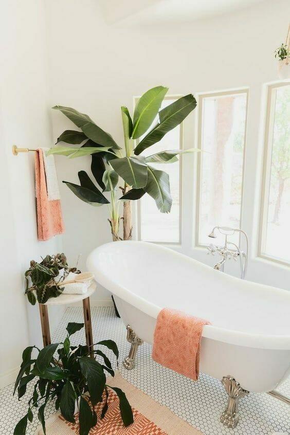 какие растения могут расти в ванной